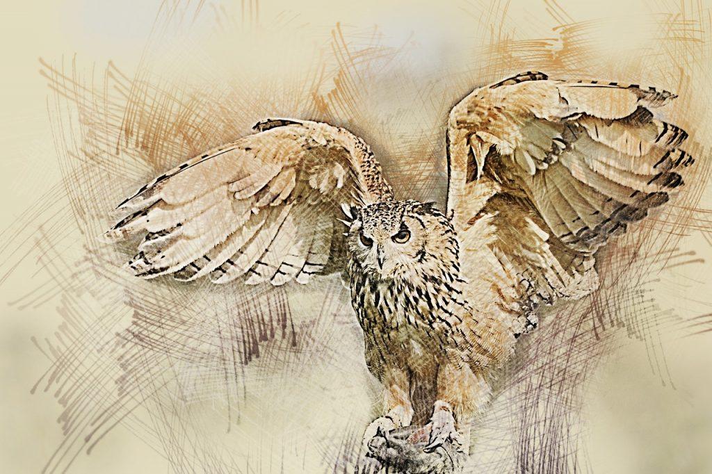 owl-1848093_1280