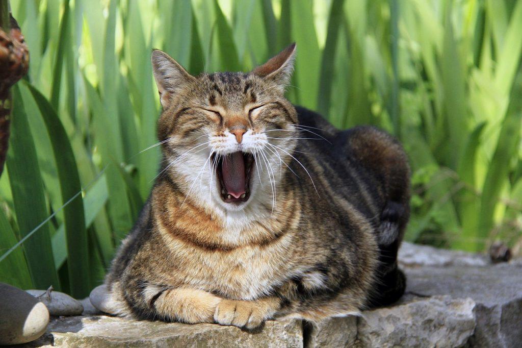 cat-1846377_1280